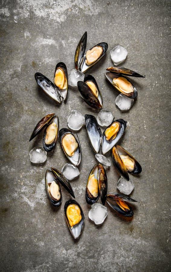 与冰的新鲜的蛤蜊 在石桌上 免版税库存图片