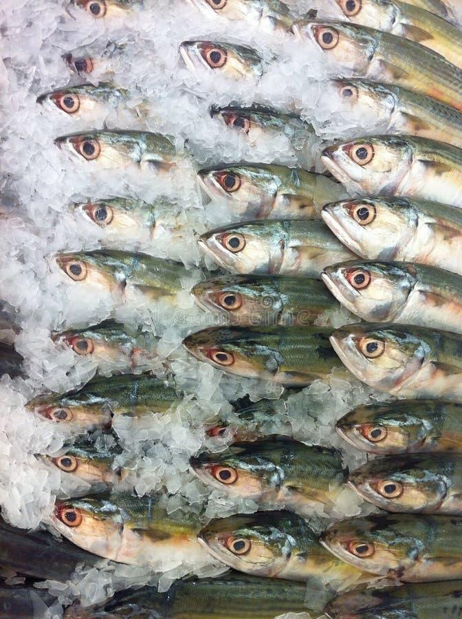 与冰的金枪鱼在市场上 免版税库存图片
