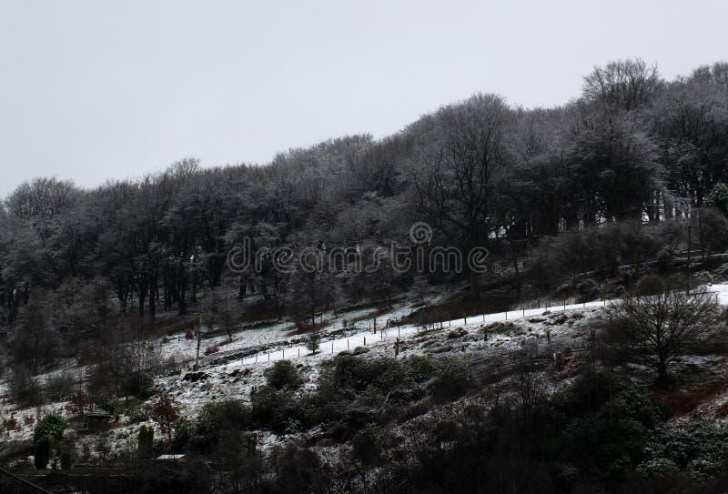 与冰的雪场面在冻结的黑暗的林木上面和山坡领域 图库摄影