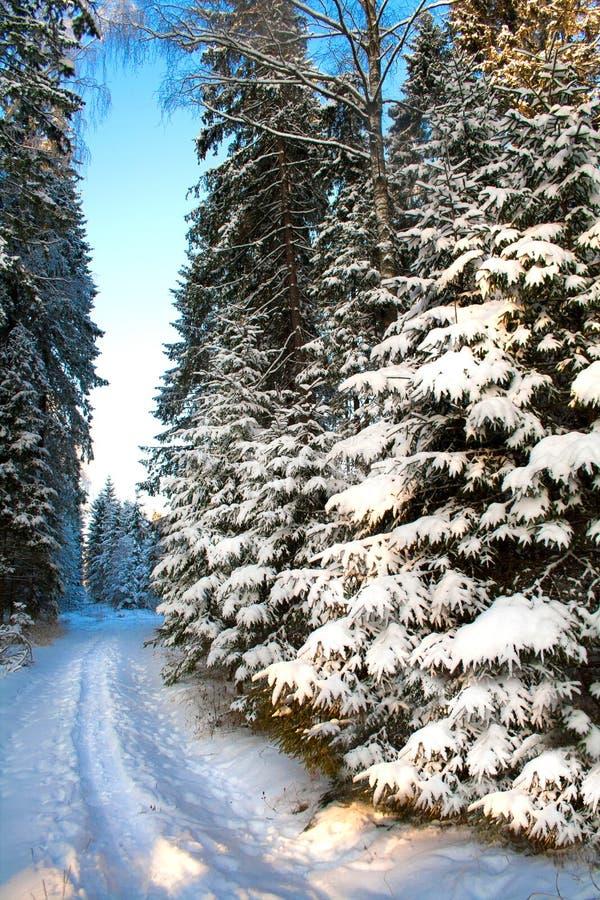 与冷杉木和森林道路的美好的冬天风景 免版税库存图片