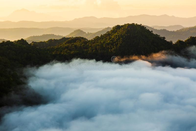 与冷杉森林的有薄雾的风景行家葡萄酒减速火箭的样式的 库存照片