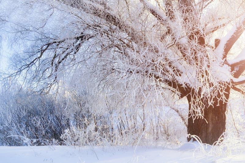 与冷淡的冬天树的冬天风景在日出放光 库存照片
