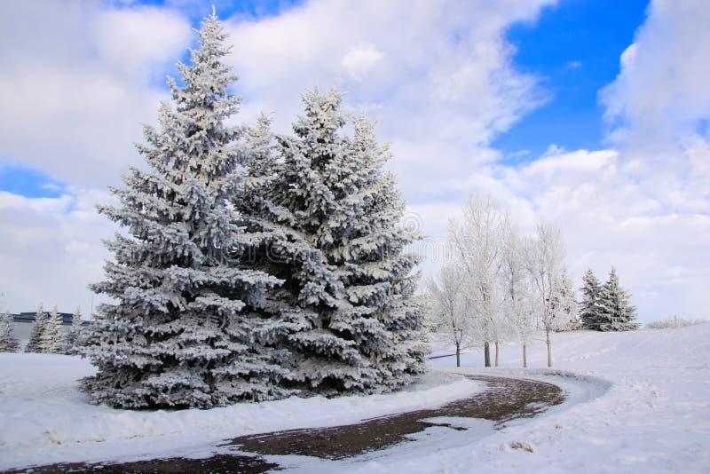 与冷淡的树的冬天风景 免版税库存照片