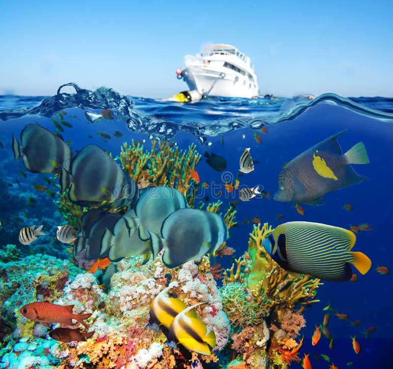 与净火珊瑚的热带Anthias鱼 库存照片