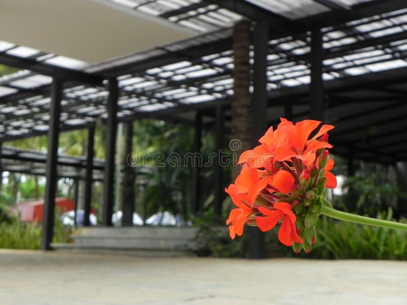 与凉快的颜色的美丽的花 免版税库存照片