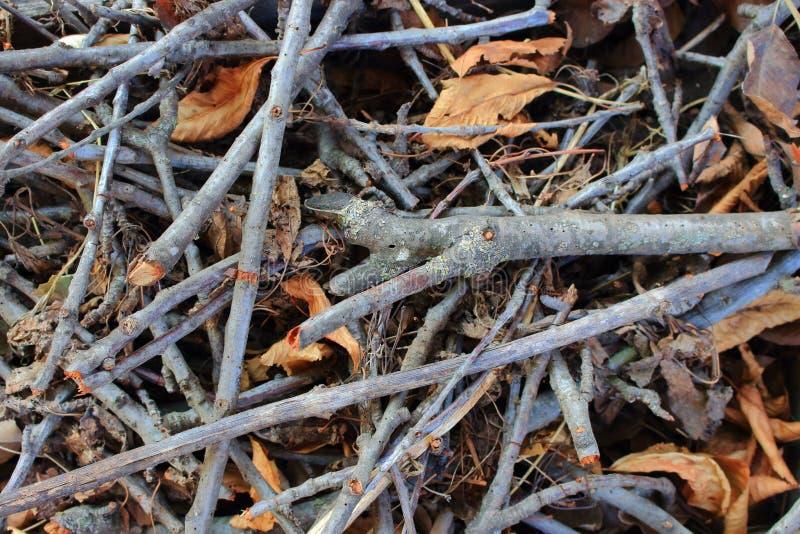 与凋枯的叶子的草丛干燥分支当秋天森林和木头背景 图库摄影