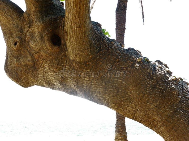 与分支的大树干 免版税库存照片