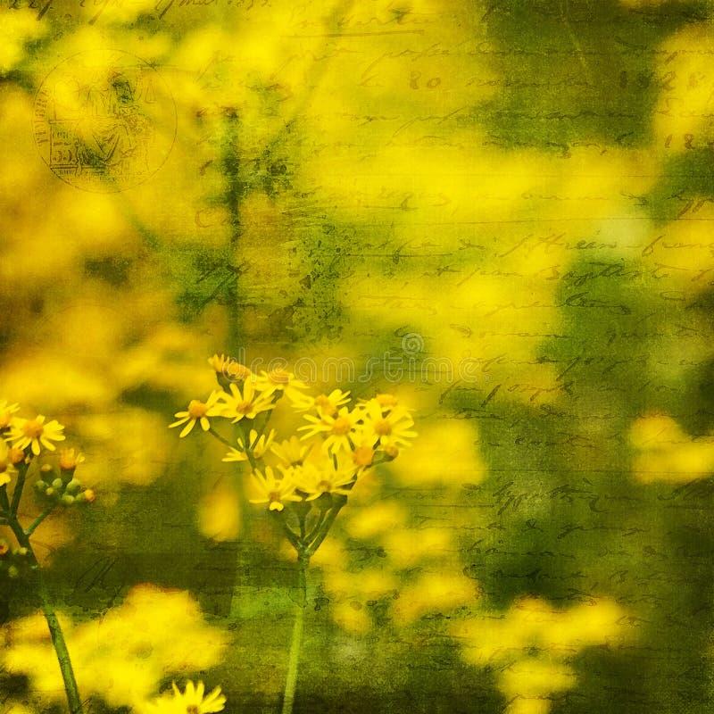 与剧本的黄色刘寄奴草野花背景 图库摄影