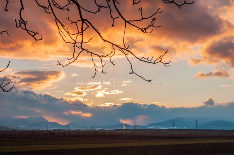 与剪影的多云日落从树橙色天空 库存图片