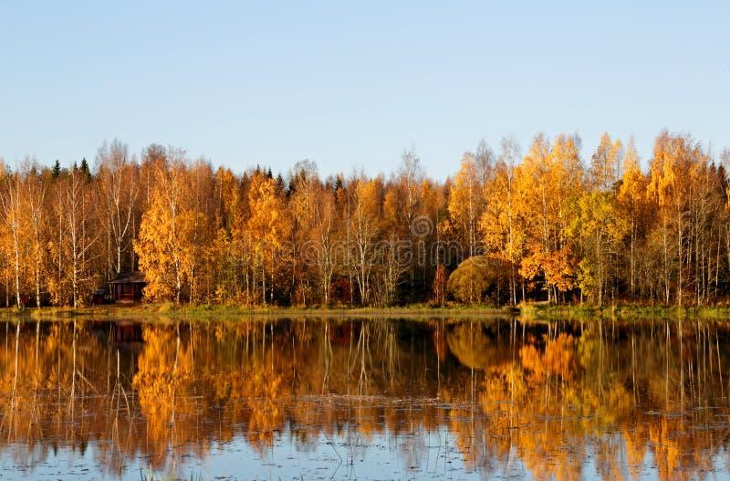 与加拿大桦和杨柳的一个看法 库存照片
