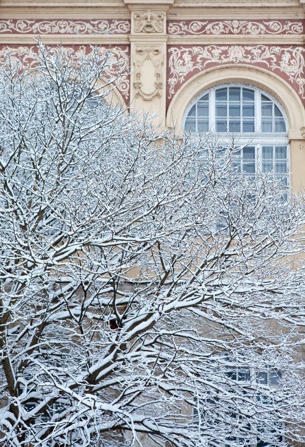 与华丽豪宅墙壁的积雪的冬天树 免版税图库摄影