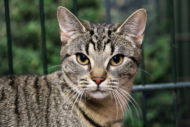 与华美的眼睛的美好的猫头像 图库摄影