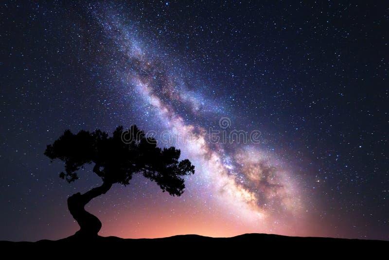 与单独弯曲的树的银河在小山 免版税库存图片