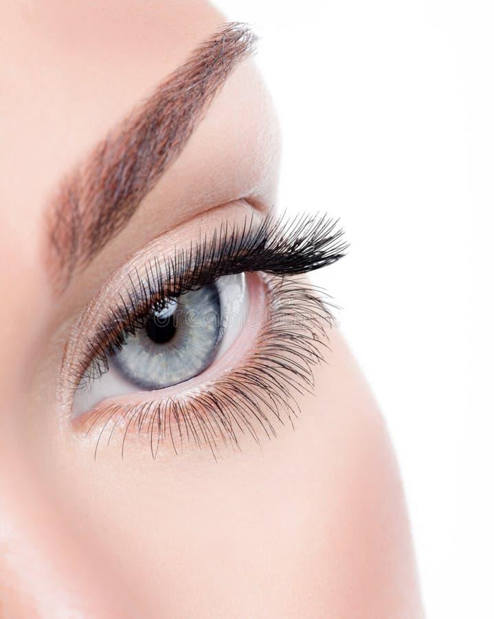 与卷毛长的假睫毛的秀丽女性眼睛 免版税图库摄影