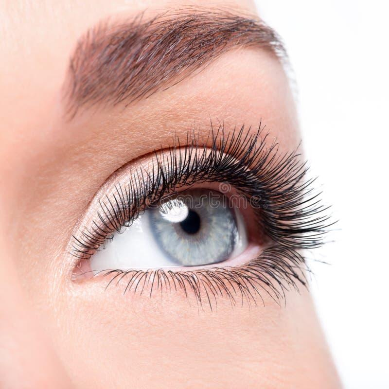 与卷毛长的假睫毛的秀丽女性眼睛 库存图片