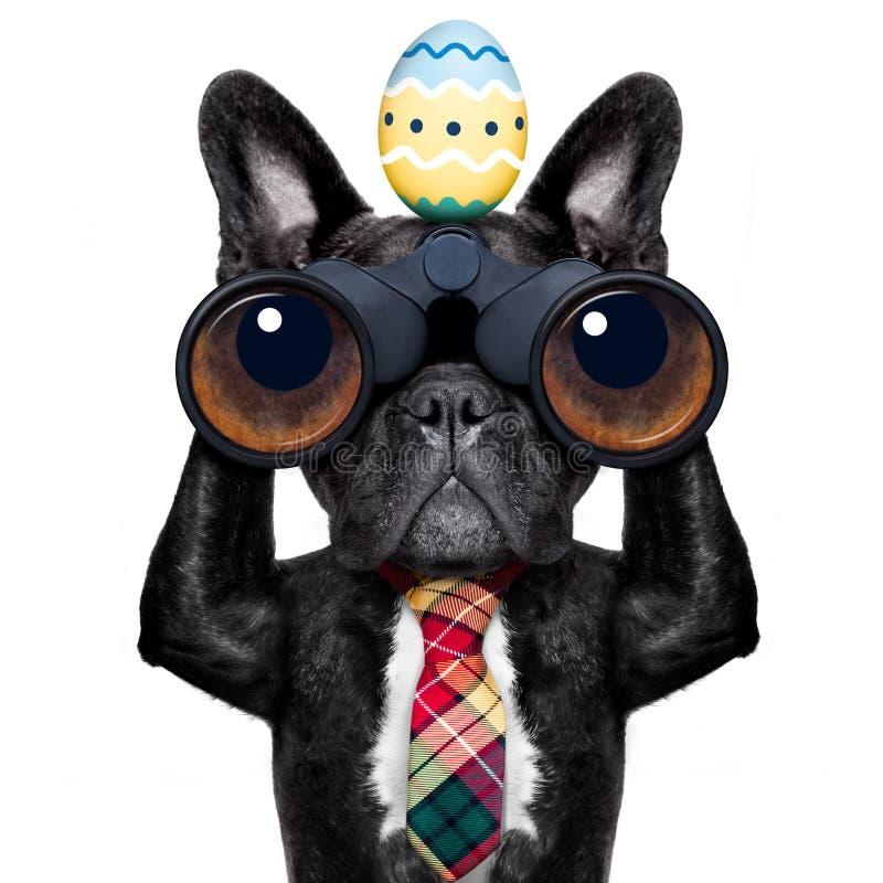 与双筒望远镜的观看的狗在复活节 库存照片