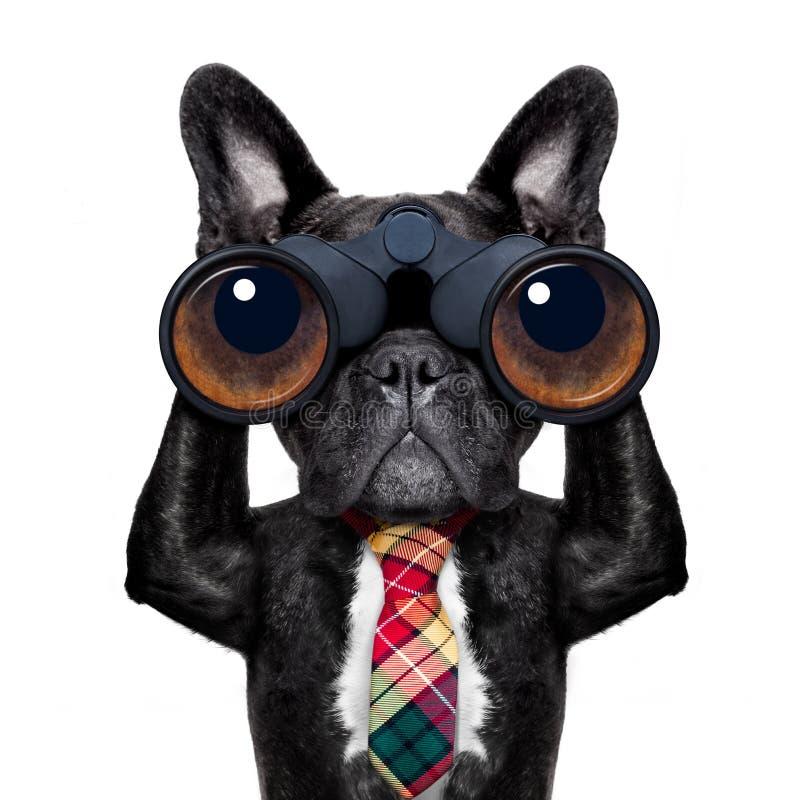 与双筒望远镜的观看的狗 免版税库存照片
