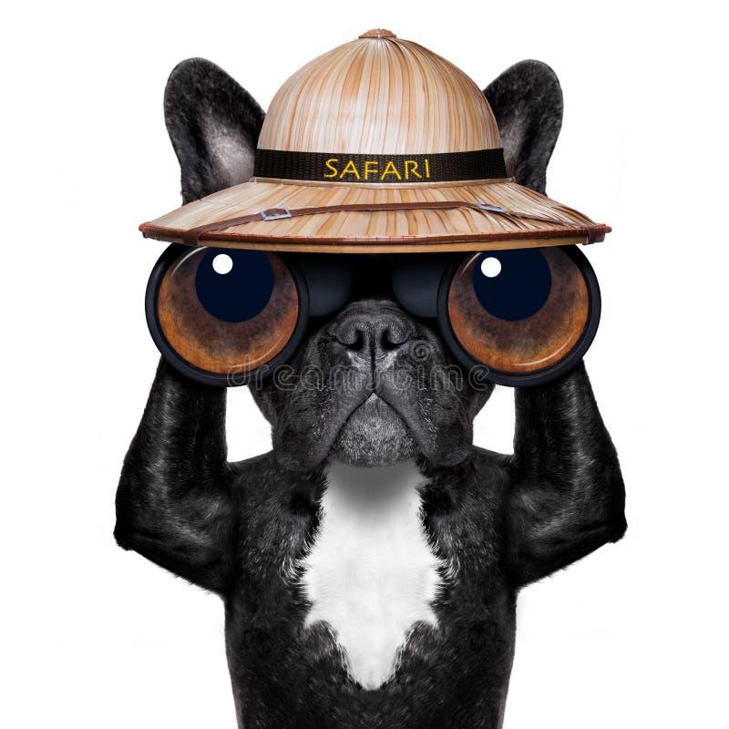 与双筒望远镜的观看的狗 免版税库存图片