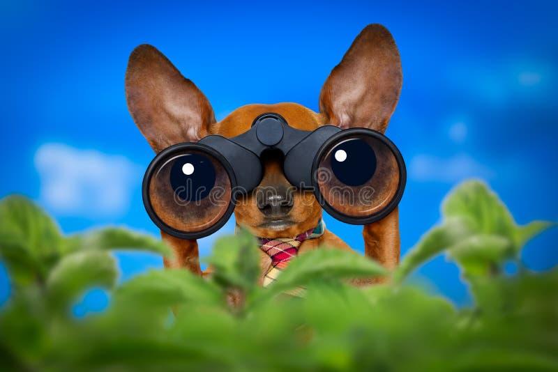 与双筒望远镜的观看的狗 免版税图库摄影
