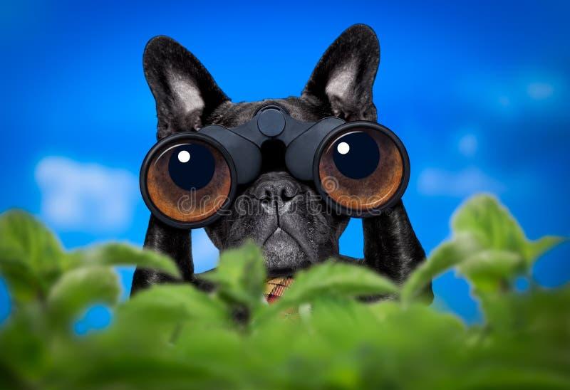 与双筒望远镜的观看的狗 库存照片
