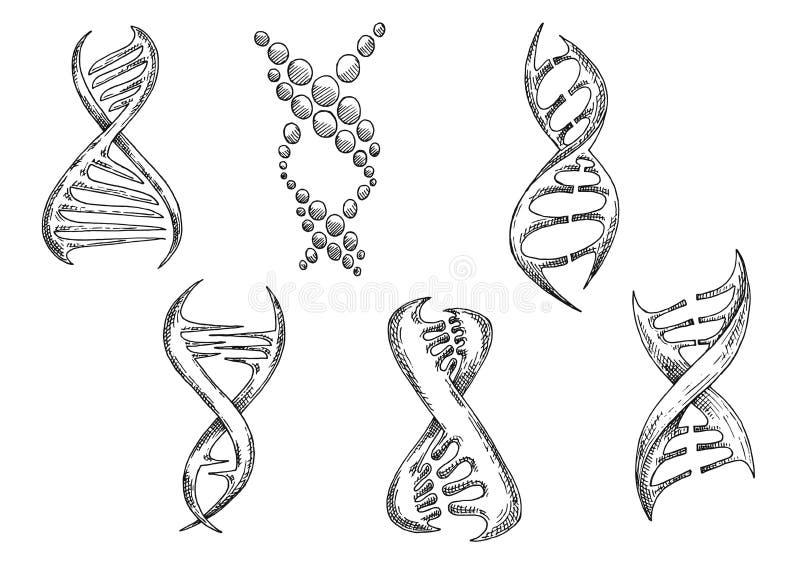与双重螺旋剪影的脱氧核糖核酸模型 库存例证