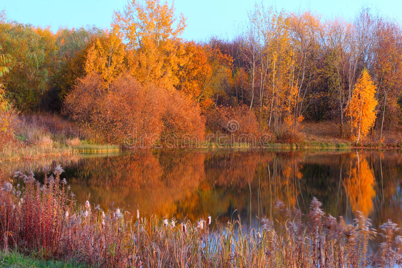 与反射在湖的树的风景 免版税库存图片