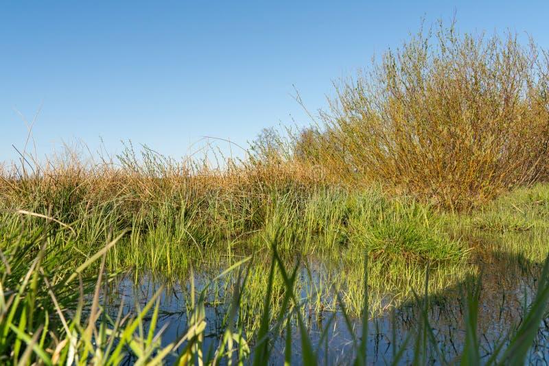 与反射的绿色春天草在作为背景的水中 库存照片