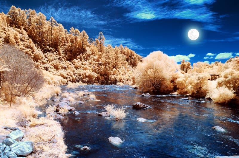 与发光在黄色红色森林的月亮的不可思议的风景 免版税库存照片