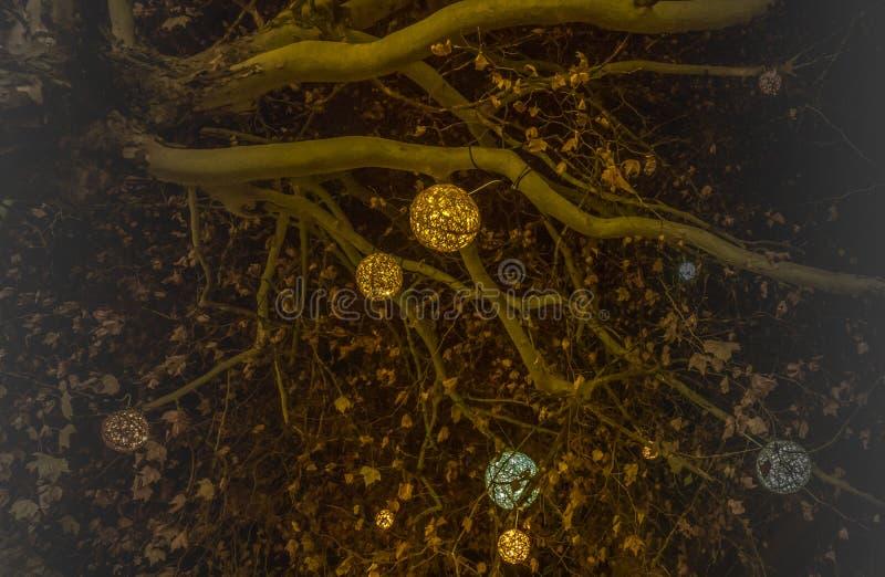 与发光的球的美好的装饰的圣诞树分支在慕尼黑 向量例证
