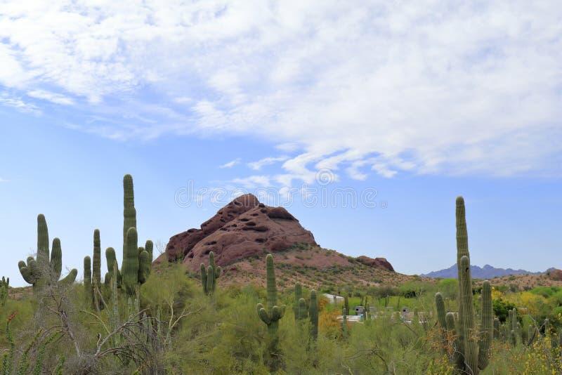 与发光,与大岩石小山的太阳的沙漠和仙人掌图片 免版税库存照片