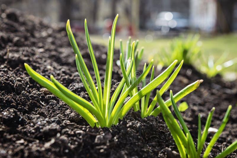 与发芽植物的自然本底 免版税库存图片