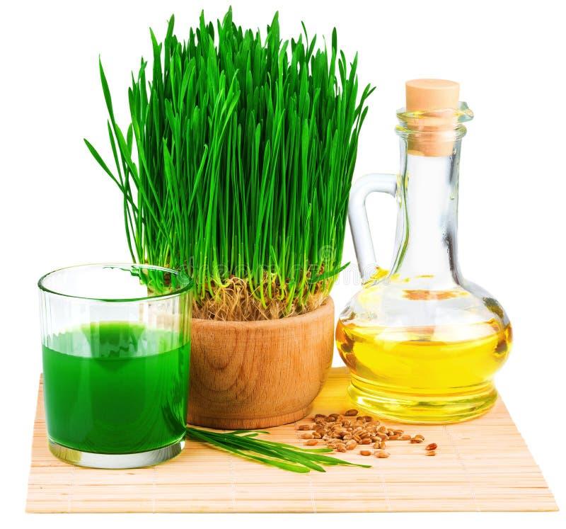 与发芽的麦子和麦芽油的Wheatgrass汁液在m 库存图片