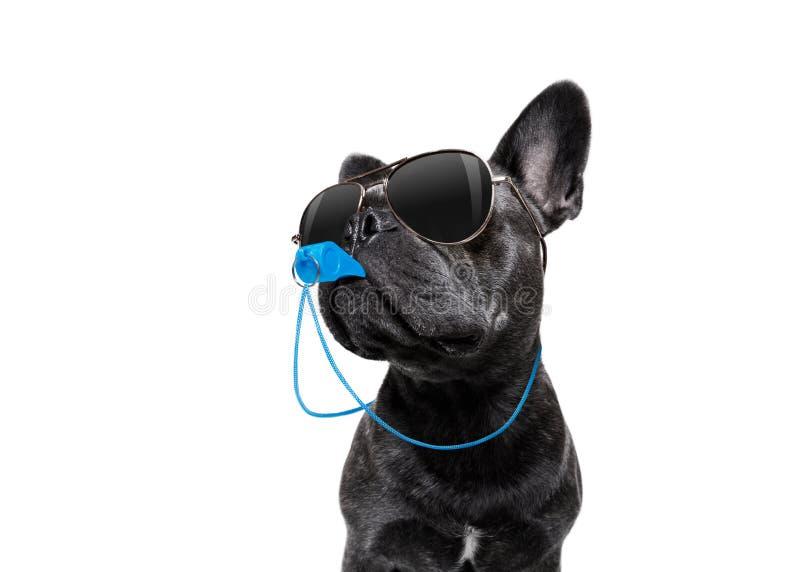 与口哨的裁判员狗 免版税库存照片