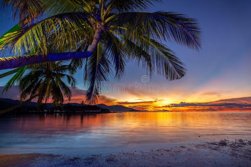 与可可椰子树的美好的日落在酸值samui泰国的海滩 图库摄影