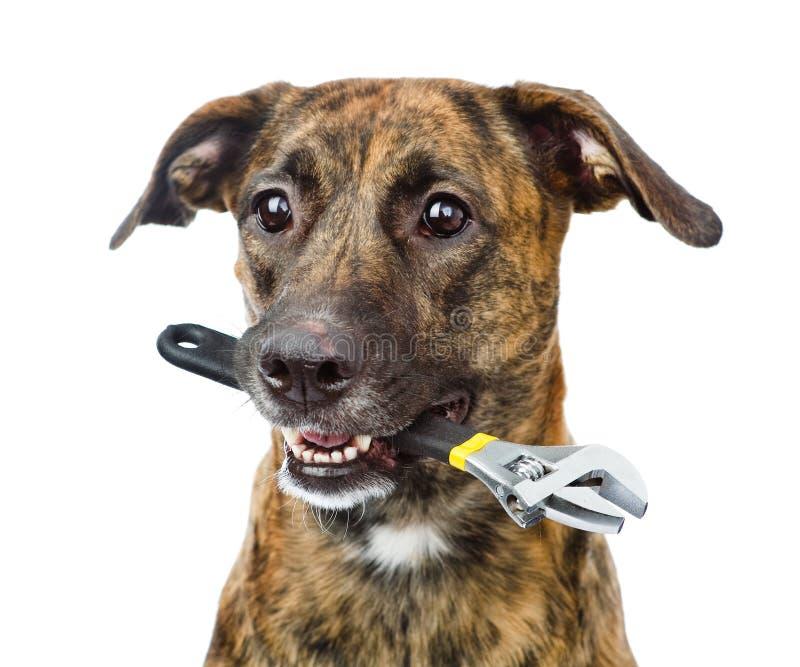 与可调扳手的狗 背景查出的白色 免版税库存照片