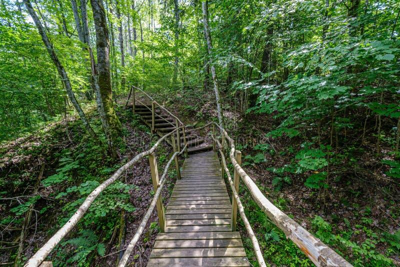 与台阶的老木板条人行桥在森林里 库存照片