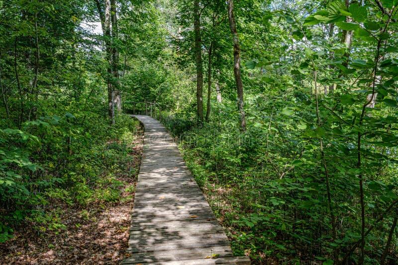 与台阶的老木板条人行桥在森林里 免版税库存图片