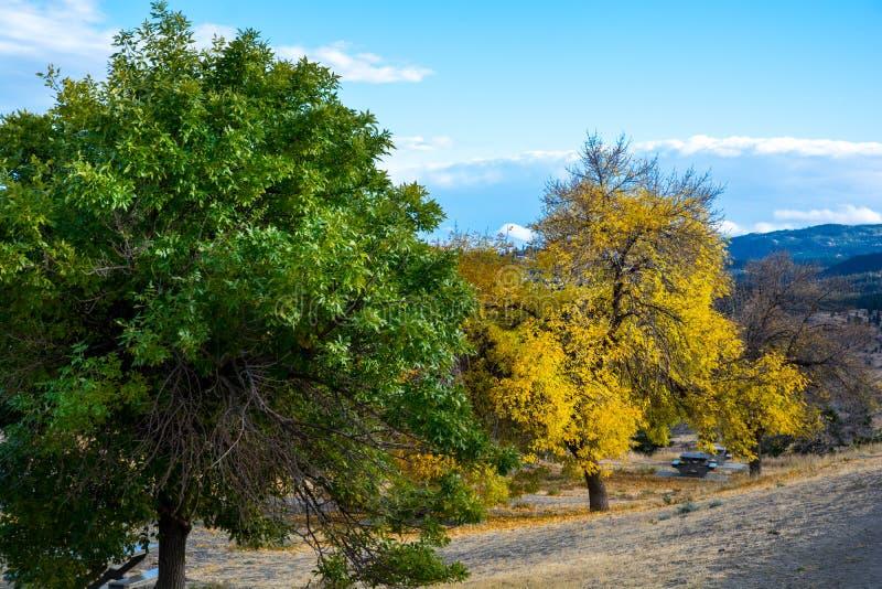 与叶子不同颜色的树  免版税库存照片