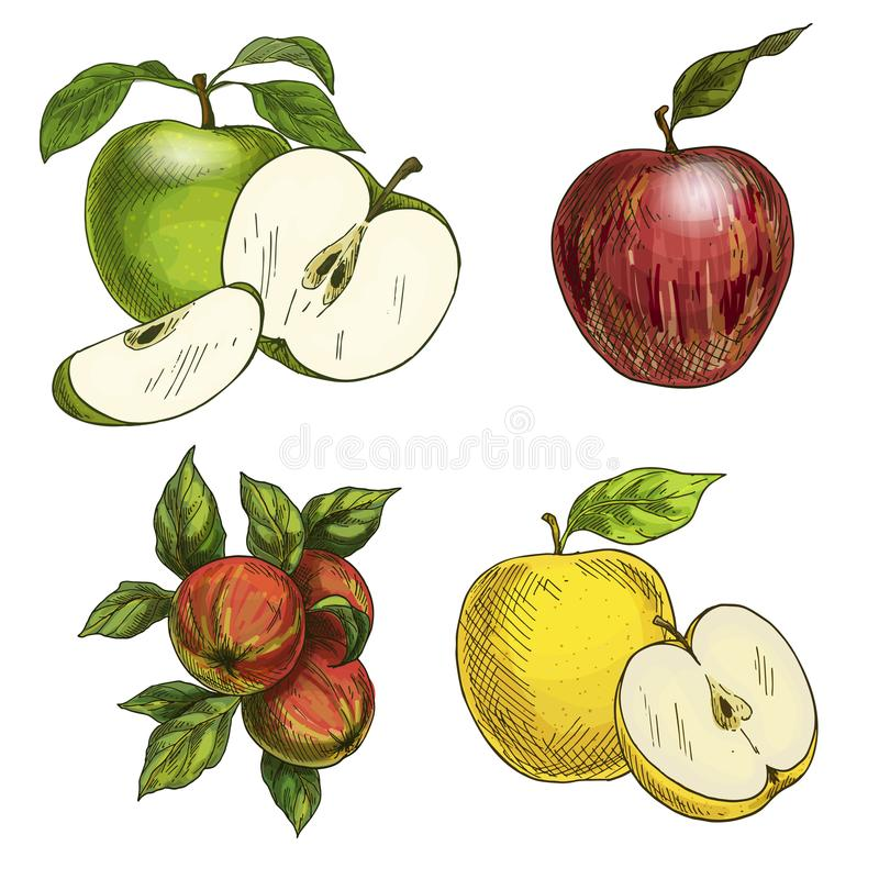 与叶子和一半的苹果果子 皇族释放例证