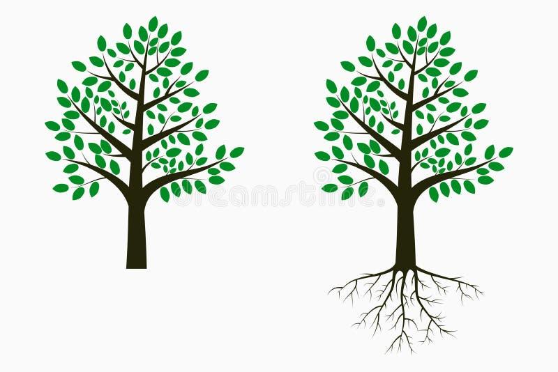 与叶子和根的树 设置结构树 向量 向量例证