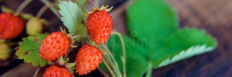 与叶子和花的新鲜的野草莓在一张简单的黑暗的木结构背景顶视图 自然器官的概念 库存照片