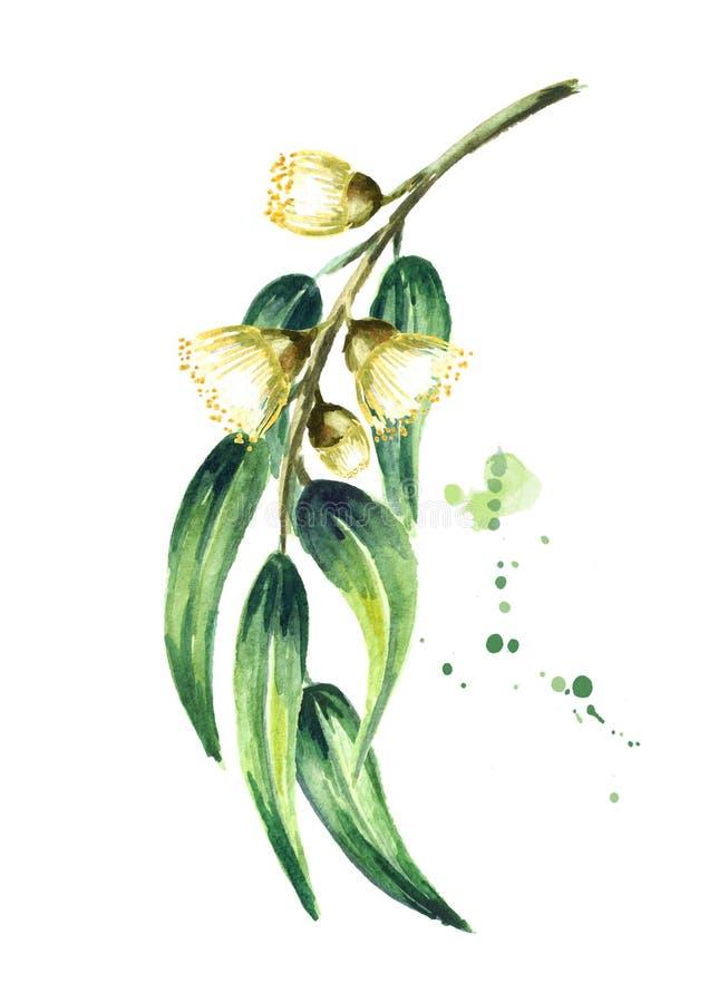 与叶子和花的玉树分支 背景查出的白色 水彩手拉的垂直的例证 向量例证