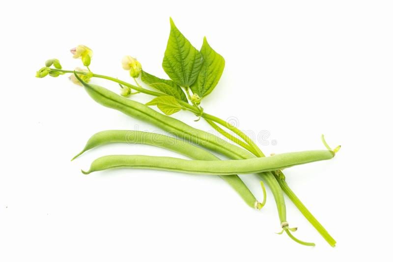 与叶子和花,黑眼睛的豆,黑眼豆荚,豇豆,在白色背景隔绝的对象的青豆 免版税库存图片