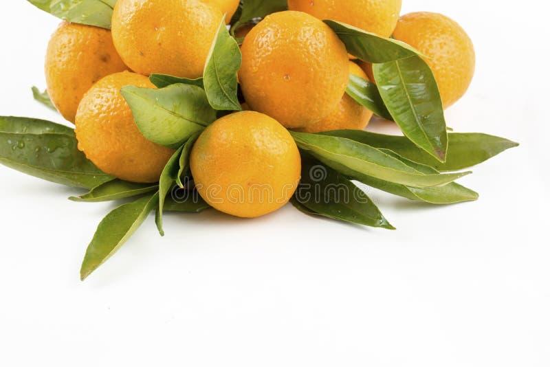与叶子特写镜头的成熟普通话在白色背景 与叶子的蜜桔在白色背景 免版税图库摄影