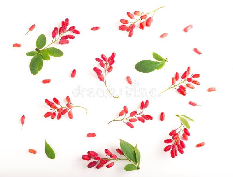 与叶子的伏牛花在白色背景 免版税库存照片