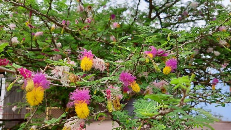 与叶子的多色花 免版税库存照片