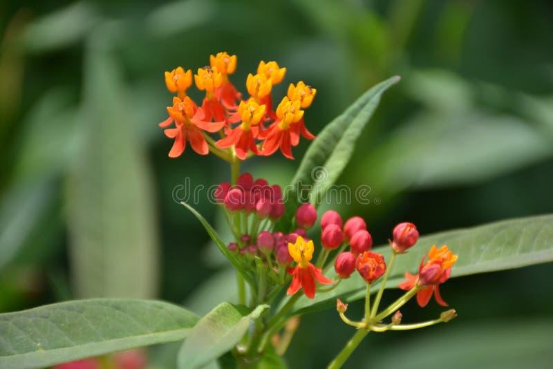 与叶子的小桃红色和橙色花 免版税库存图片