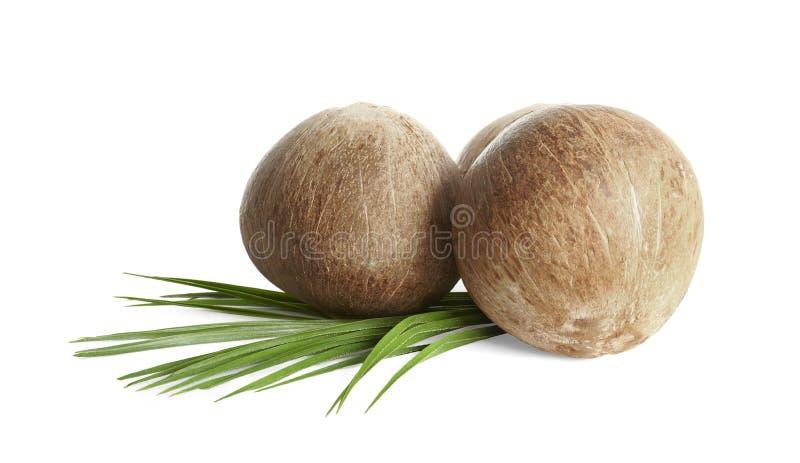 与叶子的成熟整个棕色椰子在白色 免版税库存图片