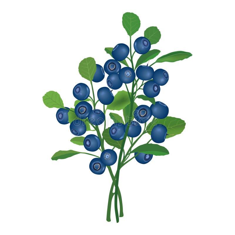 与叶子的成熟蓝莓。传染媒介例证。 皇族释放例证