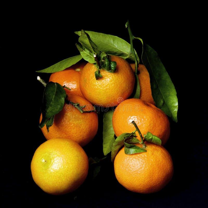 与叶子的成熟蜜桔 免版税库存照片